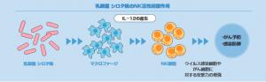 NK細胞のメカニズム